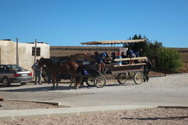 Blog camino Horse Cart