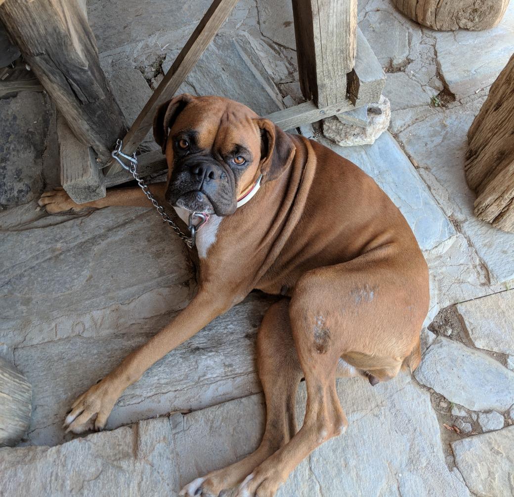 Ramons dog